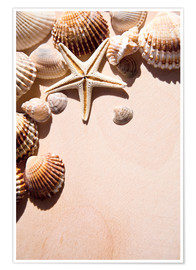 Póster Starfish and shells