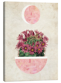 Mandy Reinmuth - sunshine cactus
