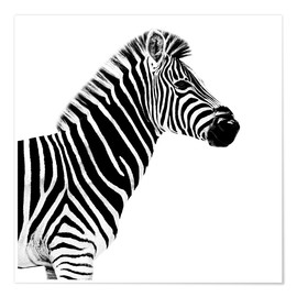 Póster Safari Profile Collection - Zebra White Edition II
