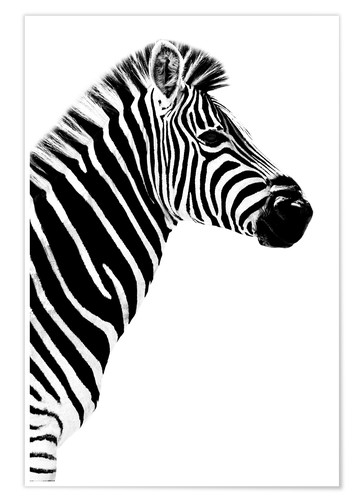 Póster Safari Profile Collection - Zebra White Edition III