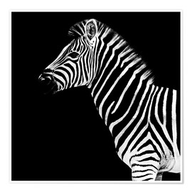 Póster Safari Profile Collection - Zebra Black Edition II