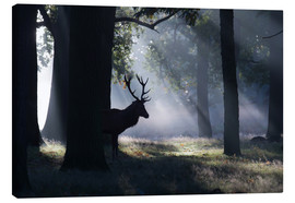 Lienzo  Stag in the morning light - Alex Saberi