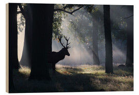 Madera  Stag in the morning light - Alex Saberi