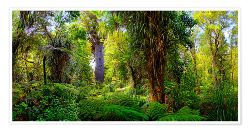 Póster New Zealand Waipoua Forest
