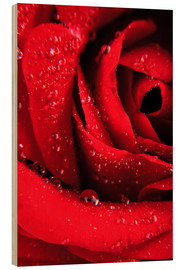 Cuadro de madera  Red rose with water drops