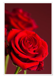 Póster Red roses