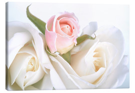 Lienzo  Roses on a white background