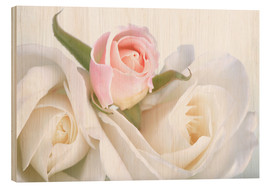 Cuadro de madera  Roses on a white background