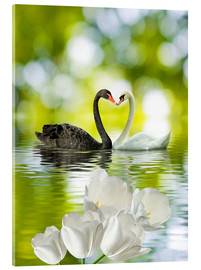 Two swans in love
