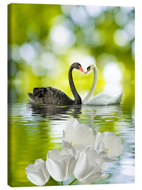 Lienzo  Two swans in love