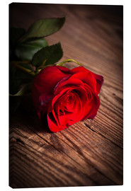 Lienzo  Red rose on wood