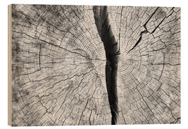 Madera  Cleaved tree trunk