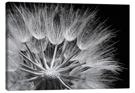 Lienzo  Dandelion on black background