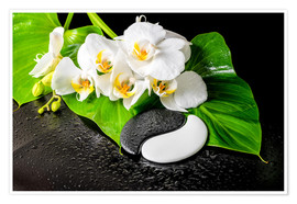 Póster  White orchids and Yin-Yang stones