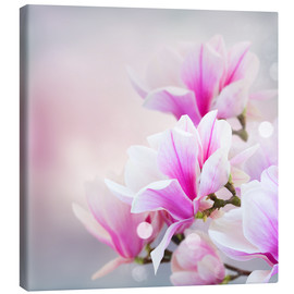 Lienzo  Magnolia flowers on bokeh background