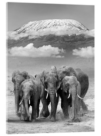 Metacrilato  Elephant herd with Kilimanjaro