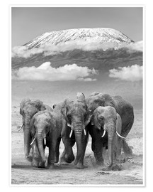 Póster  Elephant herd with Kilimanjaro