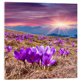 Metacrilato  Crocuses in spring in the mountains