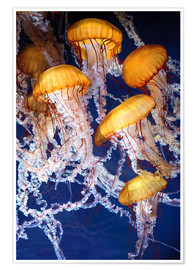 Póster  Yellow jellyfish in the ocean