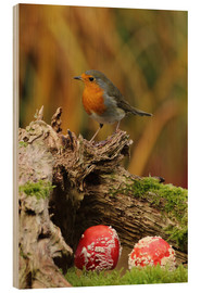 Madera  Robin in the fairy forest - Uwe Fuchs