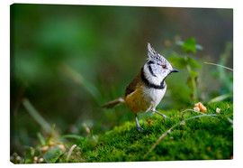 Lienzo  Cute tit standing on the forest ground - Peter Wey