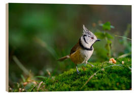 Cuadro de madera  Cute tit standing on the forest ground - Peter Wey