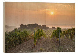Cuadro de madera  Vineyards in the morning light, Lower Austria - Gerhard Wild