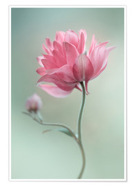 Póster  Pink blush - Mandy Disher