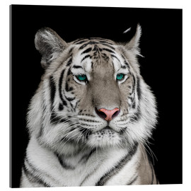 Cuadro de metacrilato  Sumatran tiger with turquoise eyes