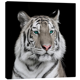Lienzo  Sumatran tiger with turquoise eyes