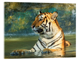 Cuadro de metacrilato  Tiger lying in the water