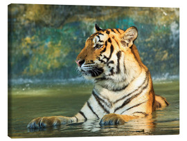 Lienzo  Tiger lying in the water