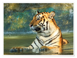 Póster  Tiger lying in the water