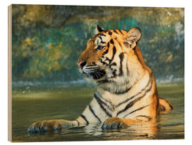Cuadro de madera  Tiger lying in the water