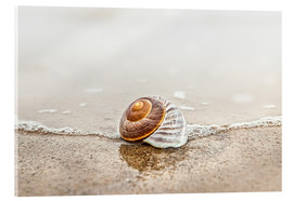 Metacrilato  Lonely shell on a beach