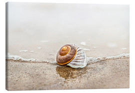 Lienzo  Lonely shell on a beach