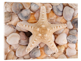 Cuadro de metacrilato  Starfish on cockleshells