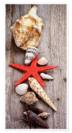 Póster  Shells on a wooden board