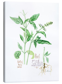 Lienzo  Herbs & Spices collection: Basil - Verbrugge Watercolor