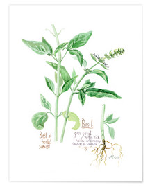 Póster Herbs & Spices collection: Basil