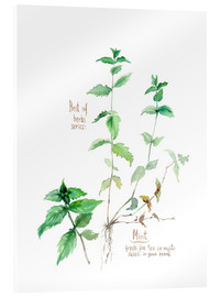 Verbrugge Watercolor - Herbs & Spices collection: Mint