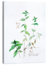Lienzo  Herbs & Spices collection: Mint - Verbrugge Watercolor