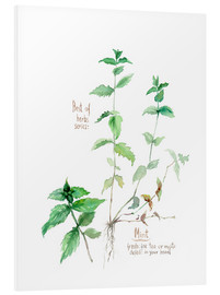 Cuadro de PVC  Herbs & Spices collection: Mint - Verbrugge Watercolor