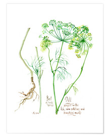 Póster Herbs & Spices collection: Dill