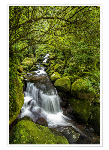 Póster Forest stream with waterfall