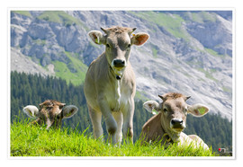 Póster Cows in an alpine pasture