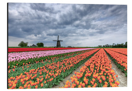 Cuadro de aluminio  Dark clouds over fields of multicolored tulips and windmill, Berkmeer, Koggenland, North Holland, Ne - Roberto Moiola