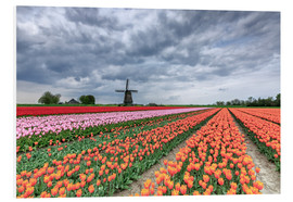 Cuadro de PVC  Dark clouds over fields of multicolored tulips and windmill, Berkmeer, Koggenland, North Holland, Ne - Roberto Moiola