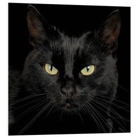 Cuadro de PVC  Black cat - Simon Murrell