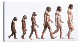 Lienzo  Timeline of human evolution, artwork - Lionel Bret